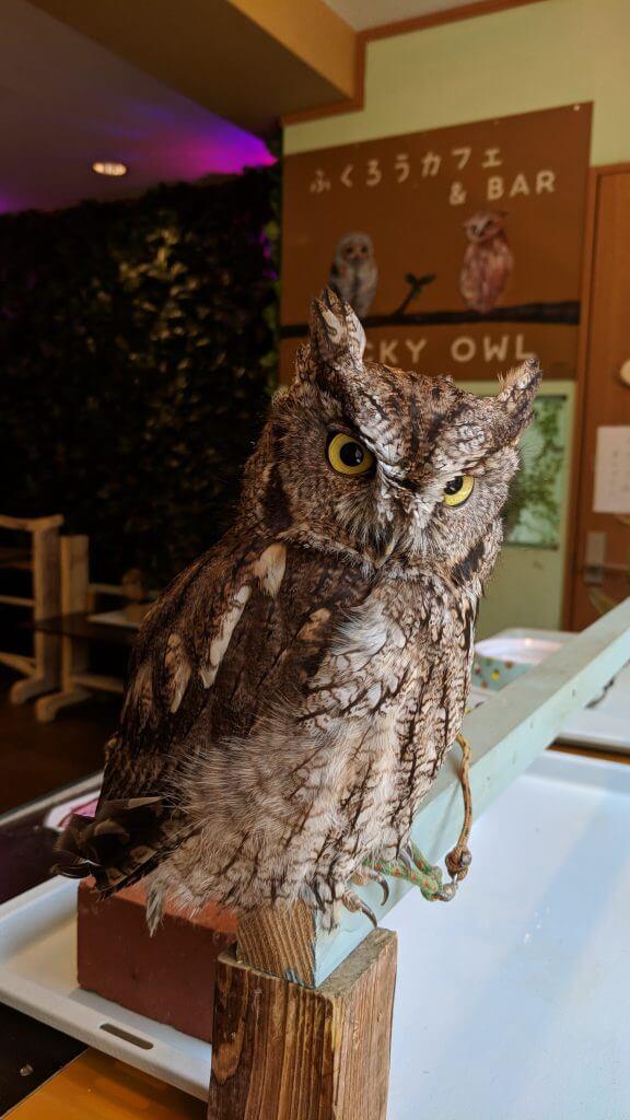 Lucky Owl Cafe near Kani Doraku Dotombori