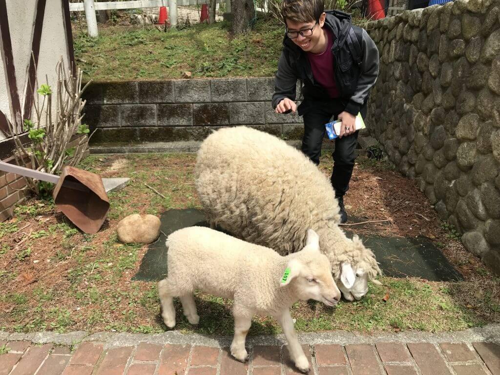Rokkosan Pasture - Sheeps