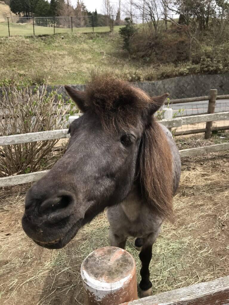 Rokkosan Pasture - Horse