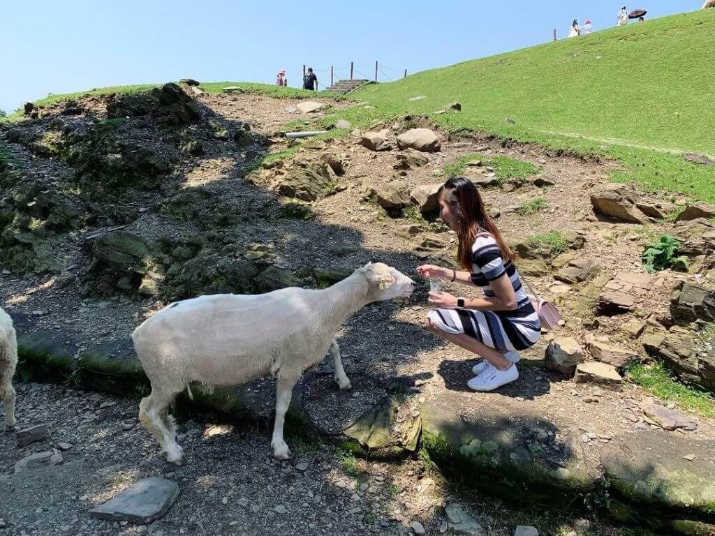 Feeding sheeps at Qing Jing Farm